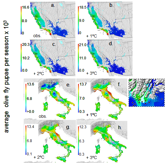 GIS analysis of the geographic distribution of olive fly in California and Italy