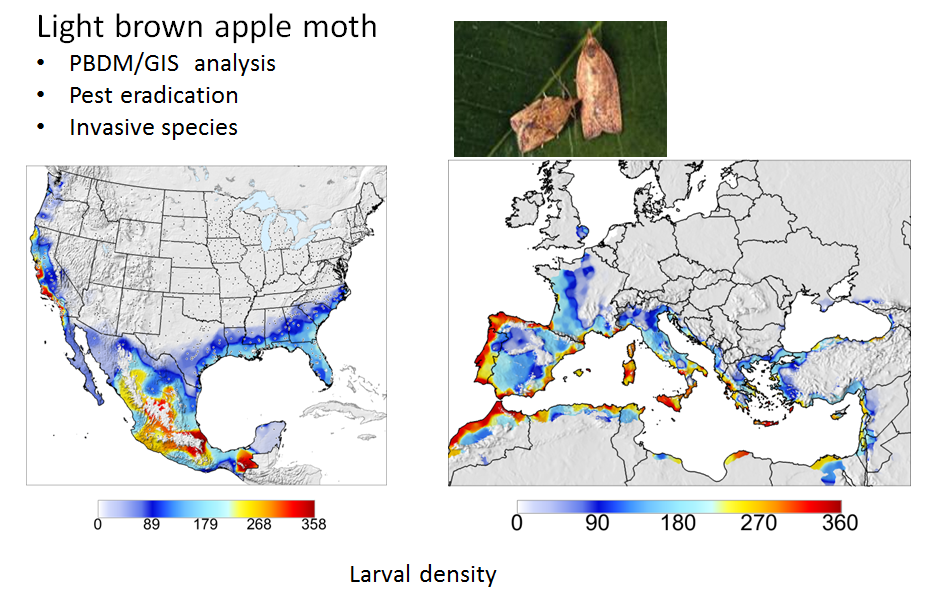 Light Brown Apple Moth Distribution