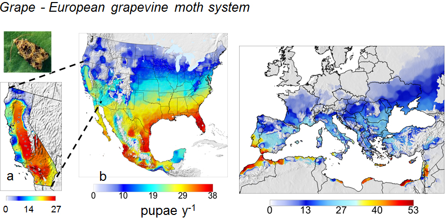 European Grapevine Moth System