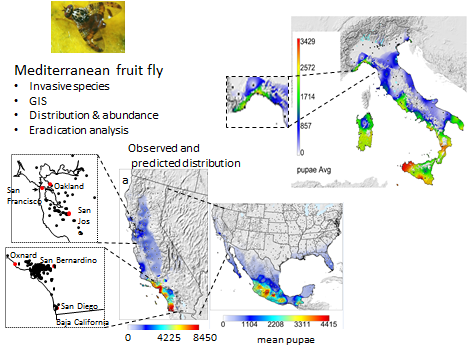 Mediterranean fruit fly in California and Italy